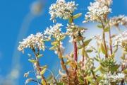 Nikon D3200 Makro: Blüten