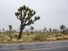 Joshua Tree National Park bei dürftigem Wetter