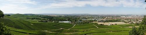 Blick auf Weinberge um Heilbronn