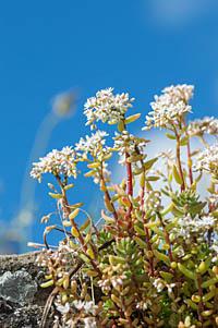 Irgendeine Blume aufgenommen mit dem Tamron 90/2.8 Di und Nikon D3200