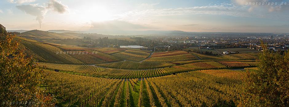 Heilbronner Weinberge im Herbst 2014