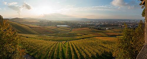 Heilbronner Weinberge im Herbst 2014. Aufgenommen an der ersten Ludwigschanze am Schweinsberg