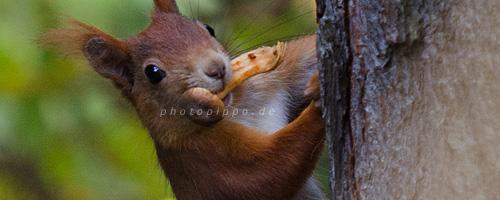 Eichhörnchen mit Pilz